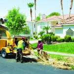 BC1000XL cippatrici Vermeer tree care